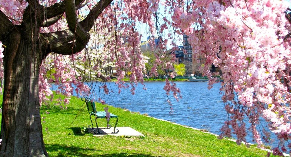 10 Lovely Places to Go on a Spring Blossom Walk